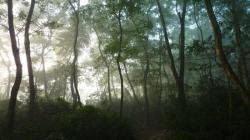 Réveil de la jungle au Chitwan