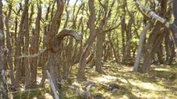 Bosque cerca del Fitz Roy - El Chalten