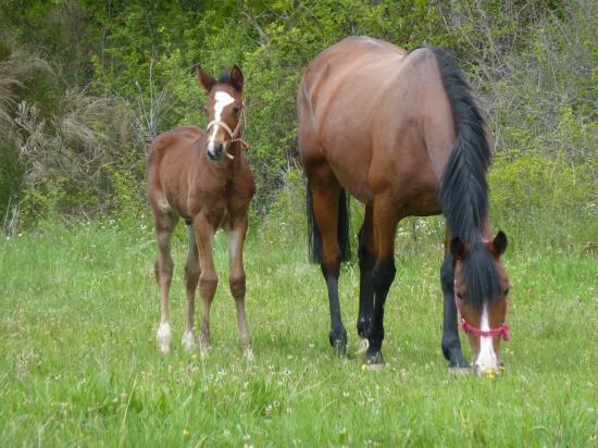 chevaux  u00e0 vendre