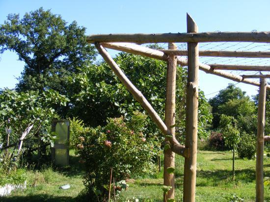 pergola bois pour kiwi