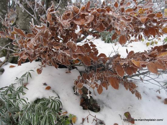 Feuille d'automne en Vercors
