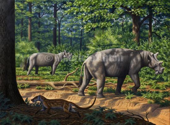 550 x 405 jpeg 57kBPurussaurus