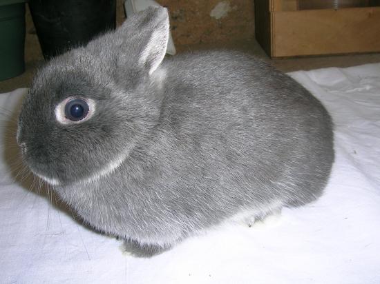nain bleu blanc flocon