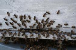 Rassemblement dans la ruche
