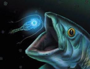 Fonction de la bioluminescence