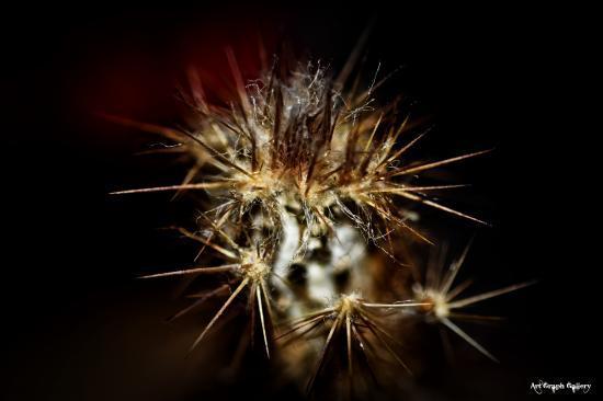 Aie ca pique - cactus