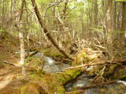 bosque de lengas - Ush