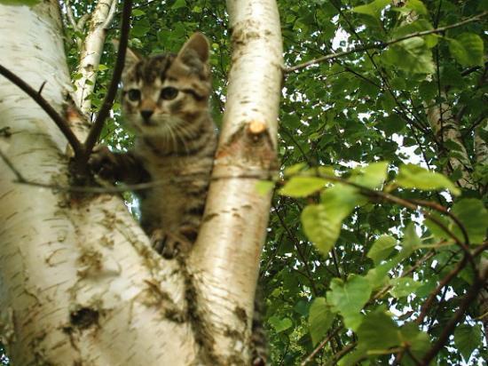 Chaton dans un arbre