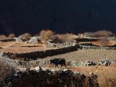 Alpages autour de Langtang