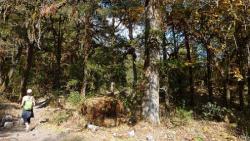 A travers bois et forêts