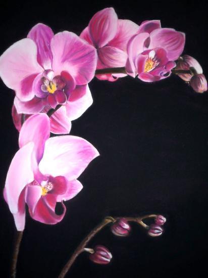 Orchidée Au Pastel Secrealisation Reportage Photo