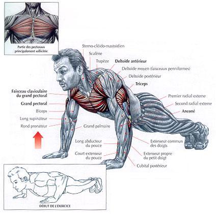 Top Musculation à domicile sans matériel spécifique ND93