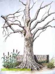 dessin d'un arbre dépouillé en hiver au crayons de couleur