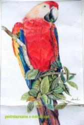 dessin aux crayons de couleur d'un perroquet