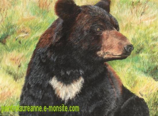 dessin au pastel sec animaux ours