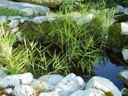 série de bassins se déversant les uns dans les autres et entourant la terrasse rénovée en mélèze