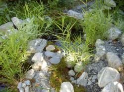 cascade de bassins se déversant les uns dans les autres et entourant la terrasse rénovée en mélèze