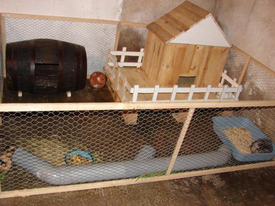 comment construire une cabane a cochon d'inde