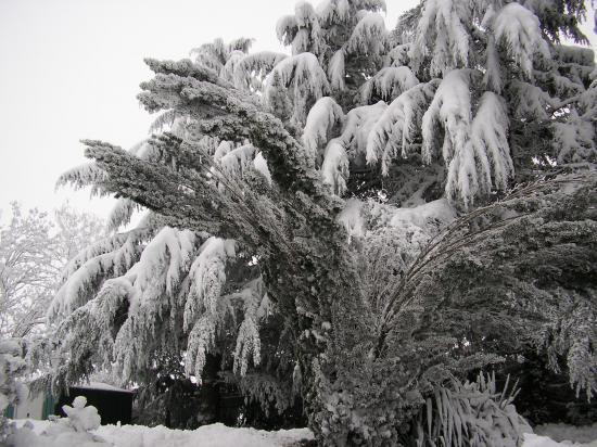 Neige début décembre 2010