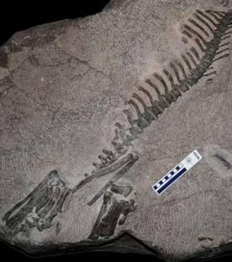 Koreaceratops hwaseongensis Hwaseong paléontologie découverte d'un fossile inconnu Corée du Sud Asia dinosaur dinosaure aquatique cornes south korea