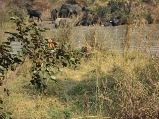 Des éléphants!