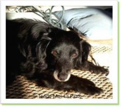 Némo, chien à adopter