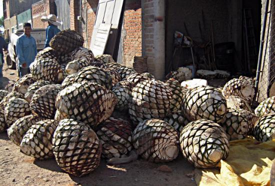 Coeurs d'agaves