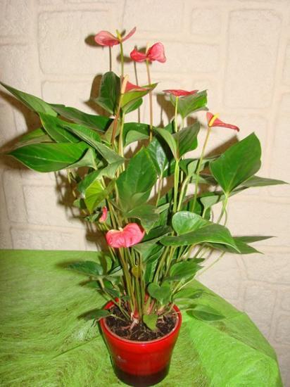 Plantes d 39 appartement - Plante verte d appartement ...