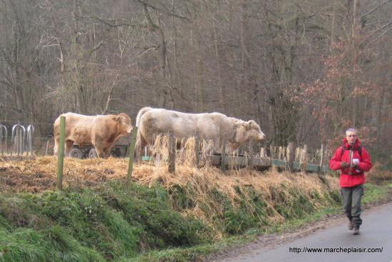 Serge et les taureaux