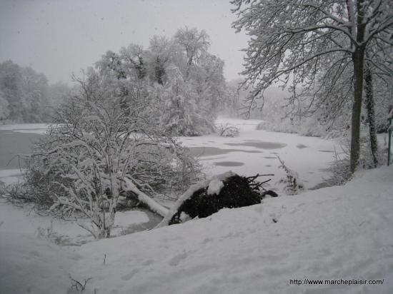 Arbre tombé sur l'étang - Parc de Grouchy - Osny