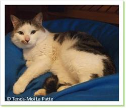 Chenapan, chat à adopter Paris