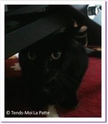 Fanny, chatte noire à adopter Paris