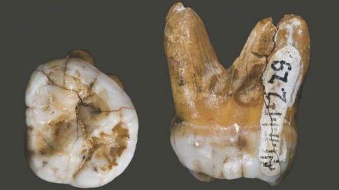 Mélanésien Svante Pääbo sapiens homo neandertalensis papouasie nouvelle guinée