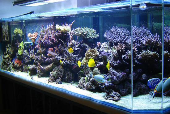 Aquarium eau de mer 1000 litres for Aquarium ouvert