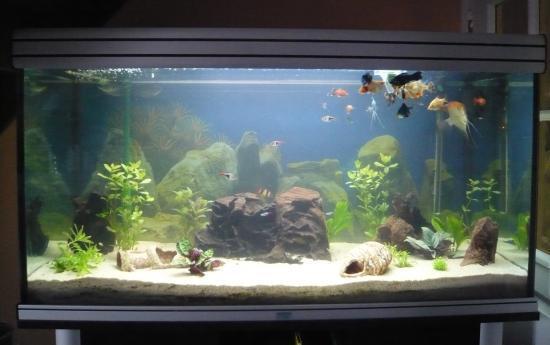 Aquarium comunotaire for Vente poisson aquarium