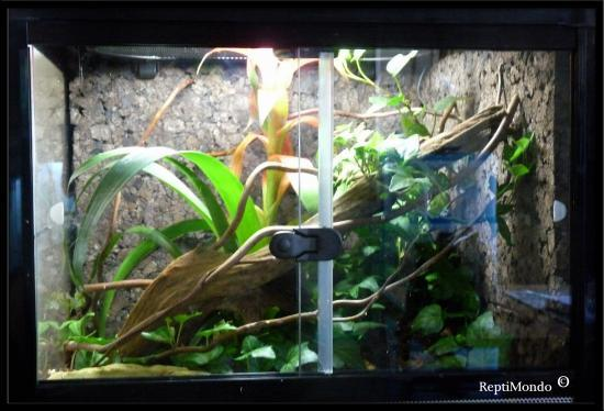 photo decor terrarium grenouille