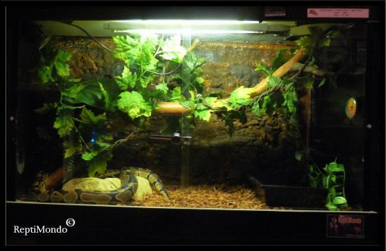 decor terrarium pour serpent