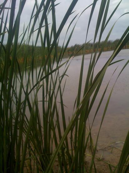 le lac de chalat
