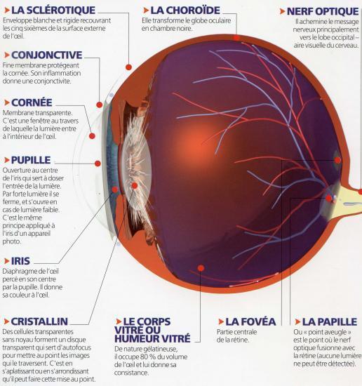 Anatomie de l 39 oeil - Couche du globe oculaire ...