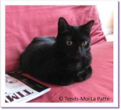 Castafiore, chatte noire à adopter !