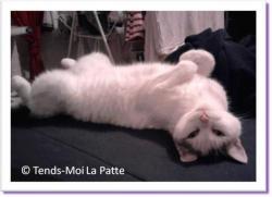 Mado, chatte à adopter Paris