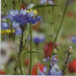 """Extrait de """"Hydrolats et eaux florales"""" Claire  Montésinos"""