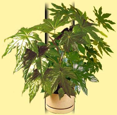 Plantes d 39 appartement e f for Plante appartement