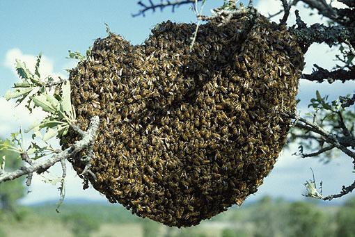 Fabrication du miel en images