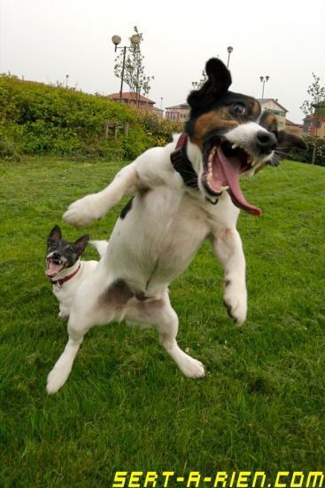 chien saute
