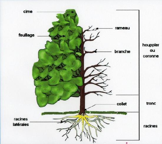 a la structure et le fonctionnement de l 39 arbre. Black Bedroom Furniture Sets. Home Design Ideas