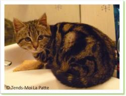 Bouli, chaton à adopter Paris