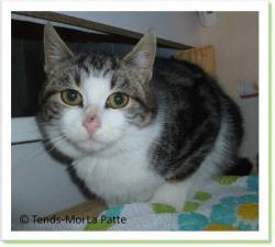 Frisby, chaton à adopter Paris