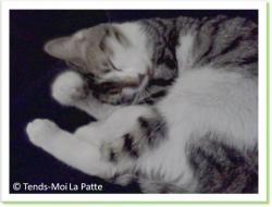 Marquis, chat à adopter Paris