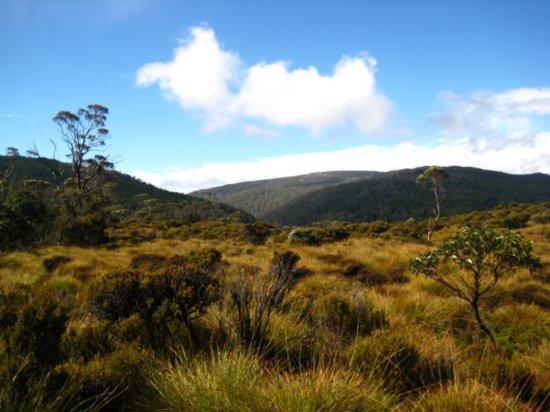 Grassland climate